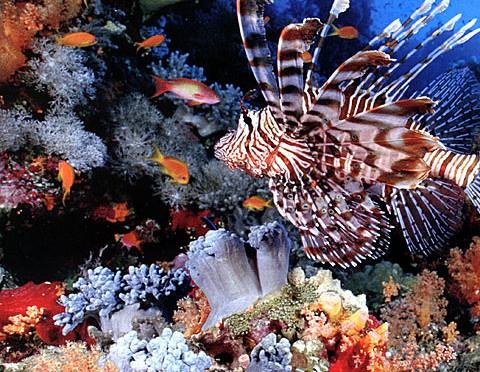 Recif de corali