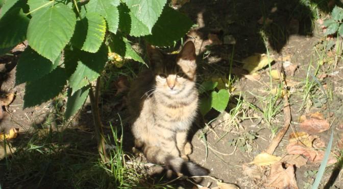 Picture pui de pisica